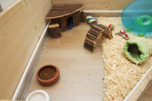 The 7 Best Guinea Pigs Ramp And Platform Of 2019