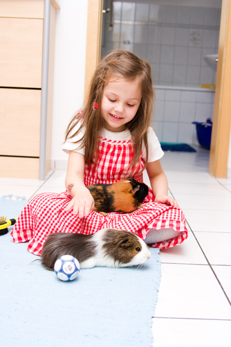 my daughter,play with two of our guinea pigs on a Ceramic floor.