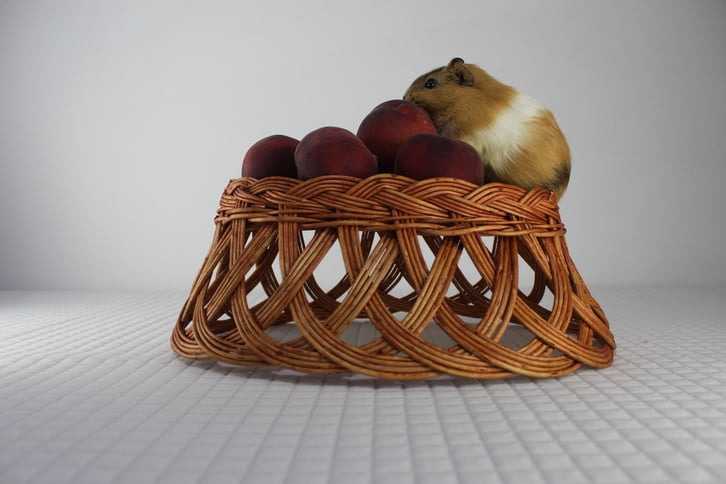 Can Guinea Pigs Eat Peaches
