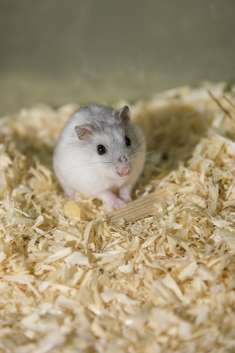 https://www.shutterstock.com/image-photo/two-funny-hamsters-eats-on-white-127744130