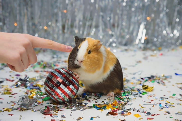 Guinea Pig Wheel and balls toys
