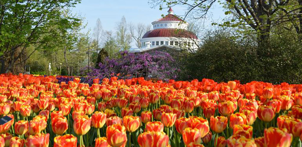 The Flowers blooming at the Cincinnati Zoo and Botanical Garden