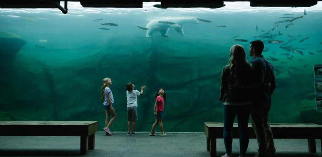 Children looking through the glass at polar bears and fish in the Columbus Zoo Aquarium