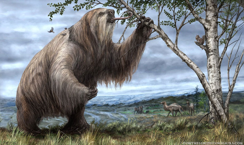An artist's depiction of a now extinct Megalonyx eating from a tree