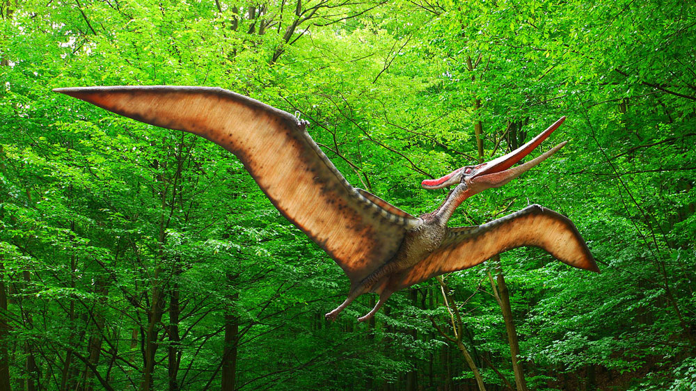 Pteranodon recreation mockup flying through the jungle