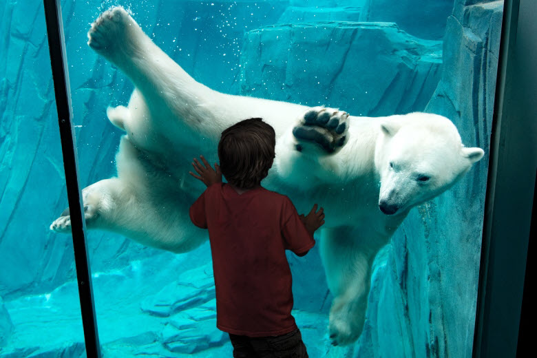 Kid looking at a polar bear underwater at the St. Louis Zoo