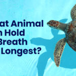 What animal can hold its breath the longest?