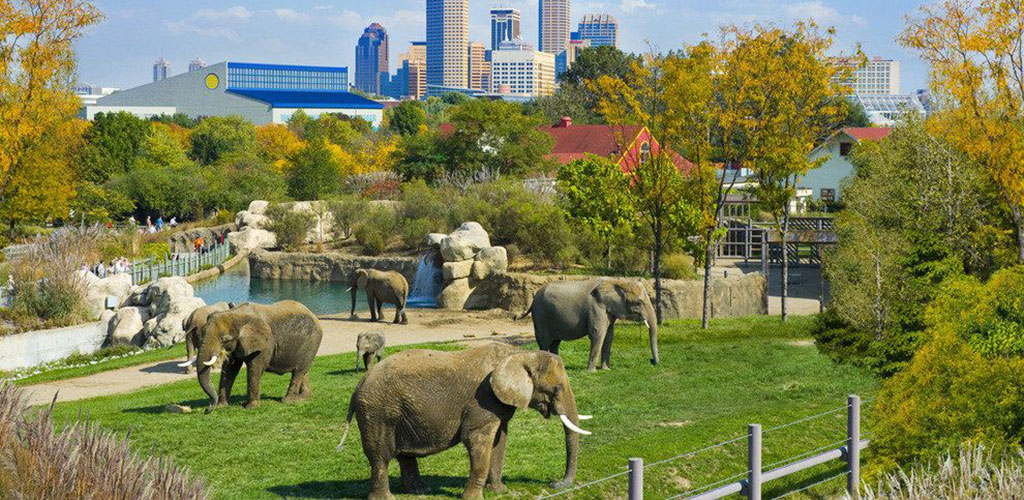Elephants at the Denver Zoo with the skyline in the background