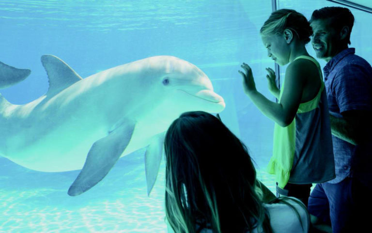 Kids and parent look at dolphins through glass at an aquarium in Las Vegas