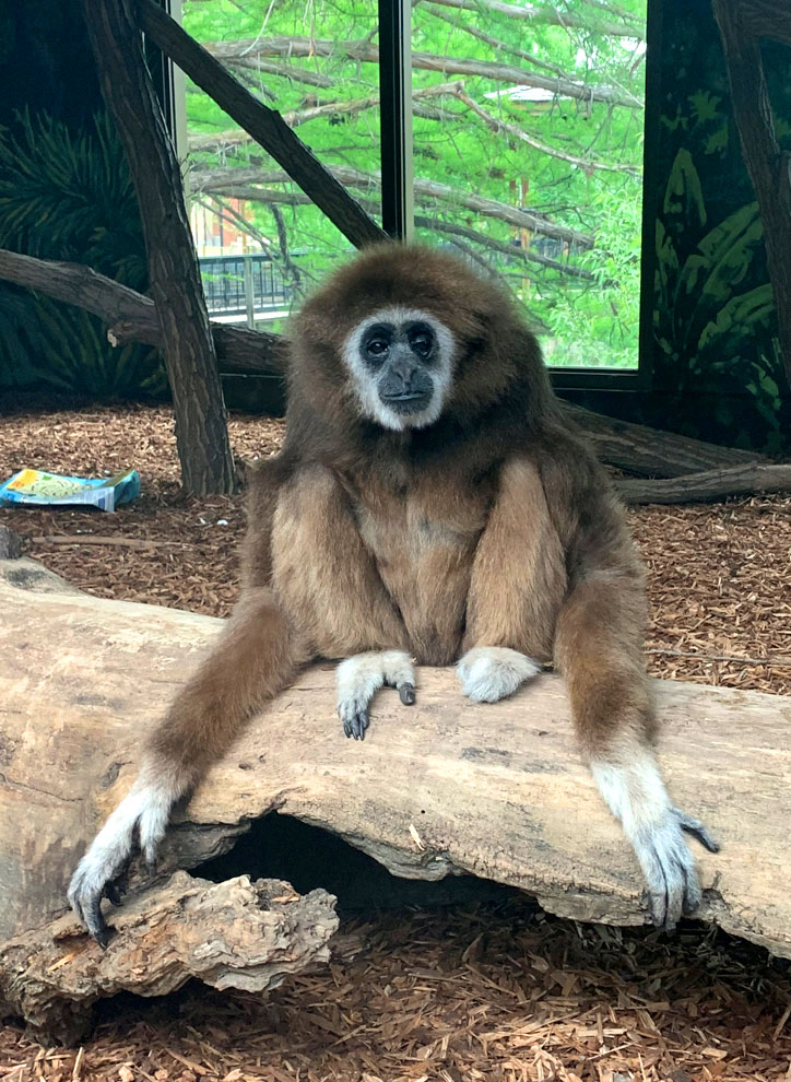 A monkey sits on a log at the zoo boise