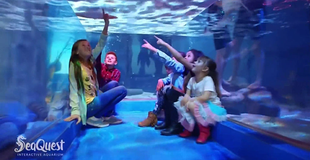 Seaquest interactive aquarium with kids pointing to fish in a tunnel