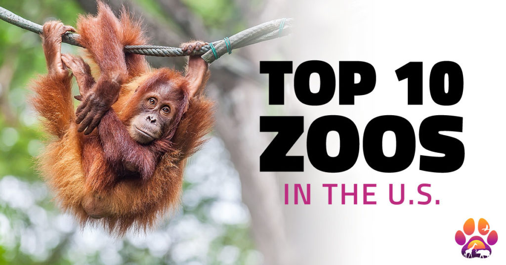 Top 10 Zoos in the U.S.