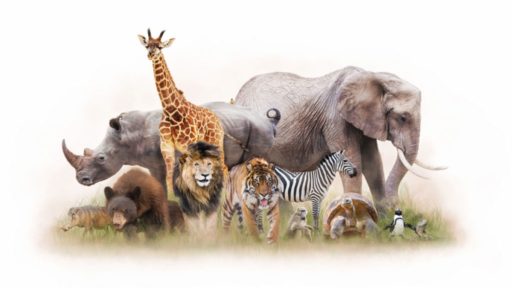 Zoo animals all together including elephant, giraffe, rhino, bear, lion, tiger, zebra, baboon, tortoise, penguin, lizard, and pig