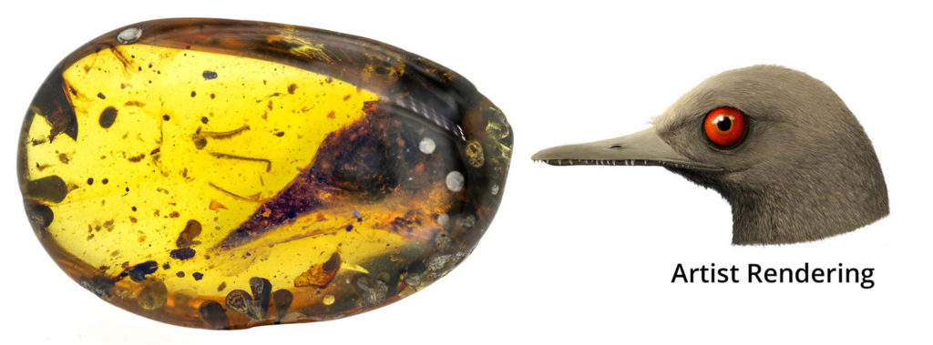 Artist rendering of the Oculudentavis and the amber where the fossil was found of the eye tooth bird