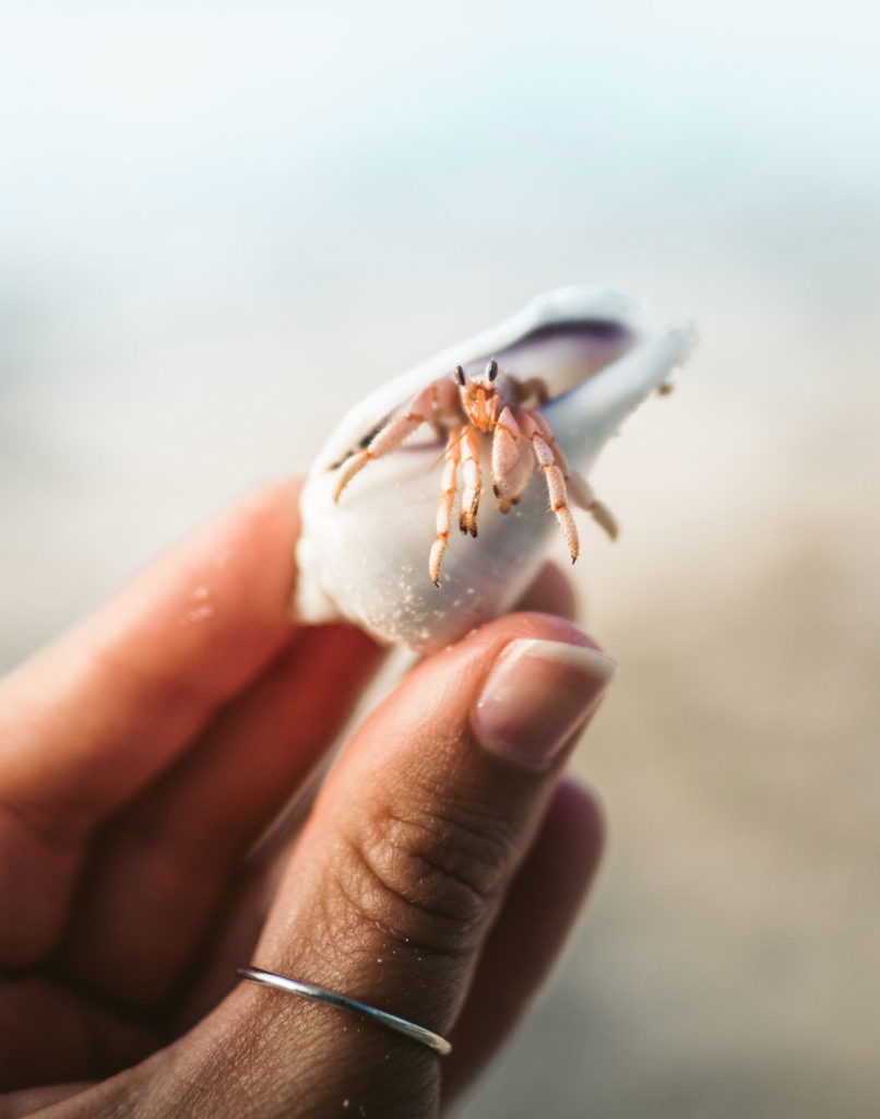 Hermit Crab at the beach being held in a woman's fingers