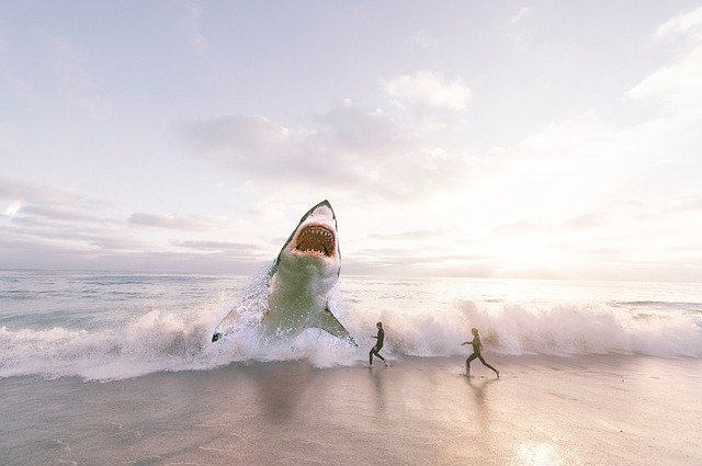 how long can a shark survive out of water