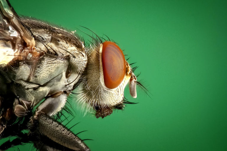 A macro close up shot of a fly's eye with its thousands of lenses