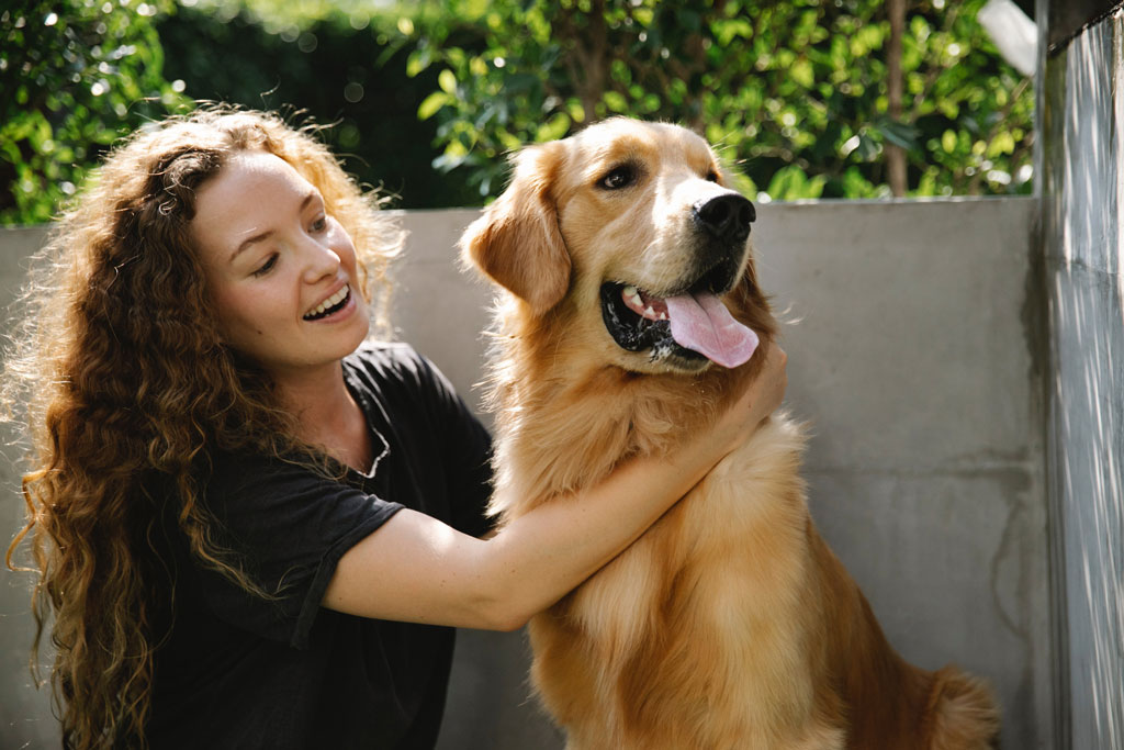 A happy Golden Retriever dog being cuddled with its owner